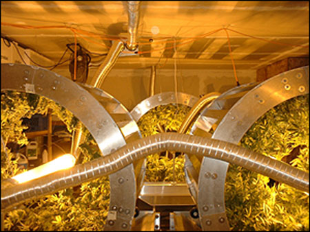 weed ferris wheel